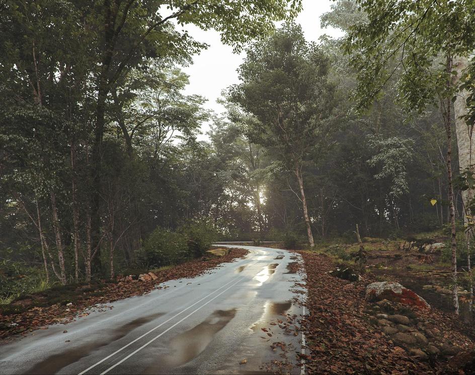 Forest Sabaduriby Michael
