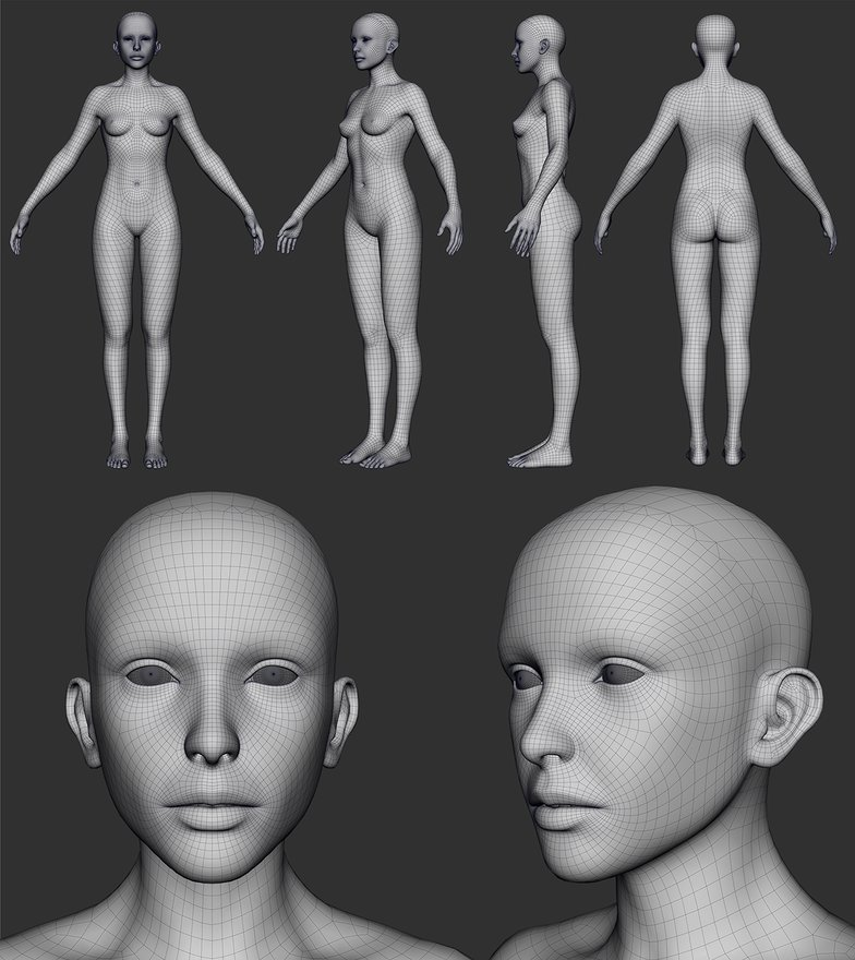 3d anatomy sculpting