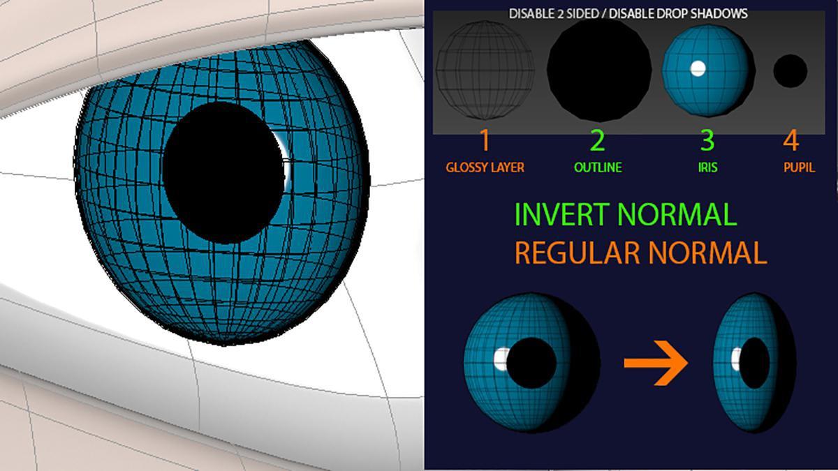 eye structure 3d design