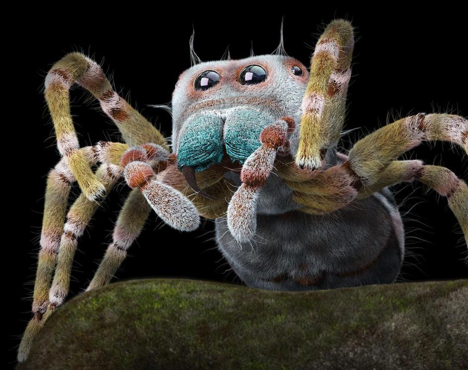 Jumping Spiderby Felipe Gomez