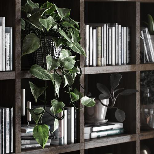 bookcase vines 3d render realism watch desk office