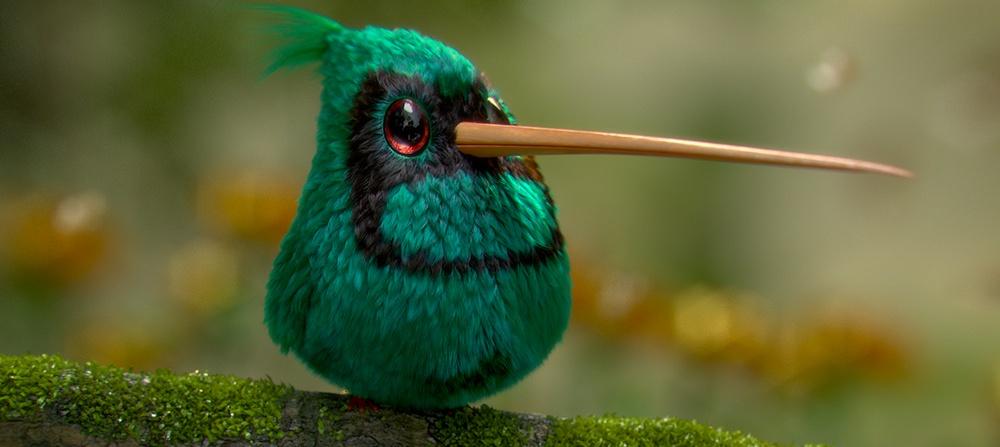 animal hummingbird