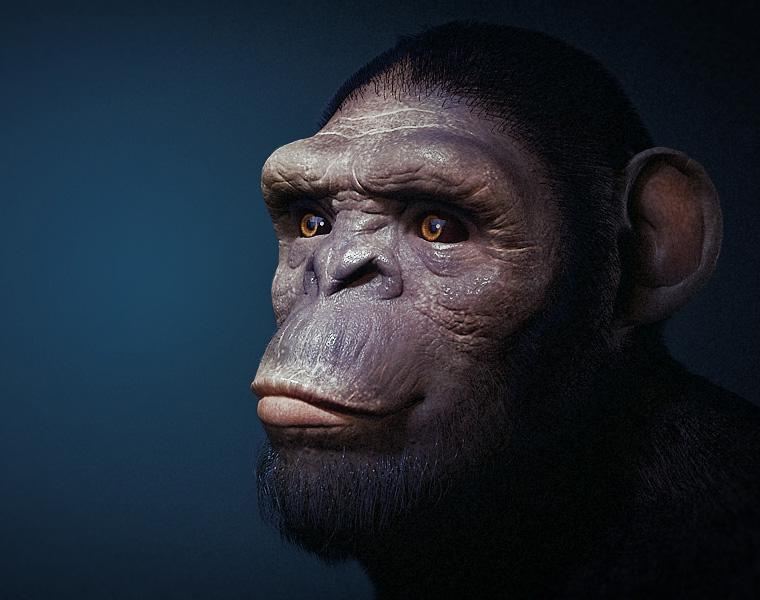chimp_finalby Sujay Paul