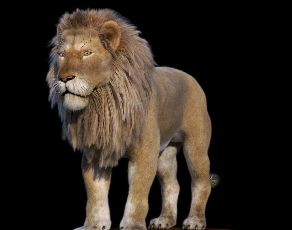 Lionby Jacson Felipe Gomez
