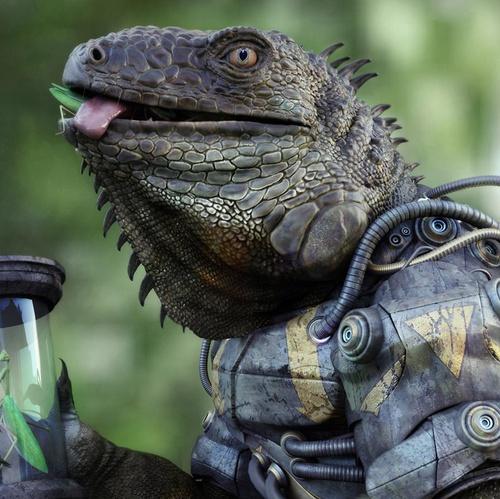 animal iguana