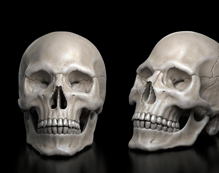 Human skullby Panos Cheliotis