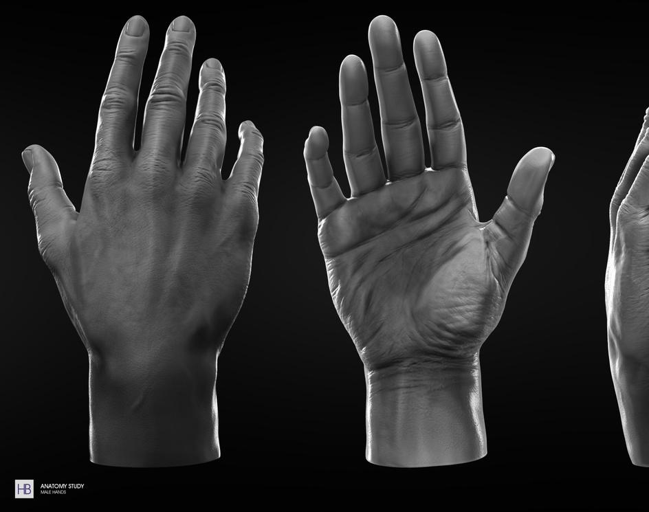 estudo_de_anatomia_-_m_os_masculinas_para_3d_total.pngby Haroldo Braga