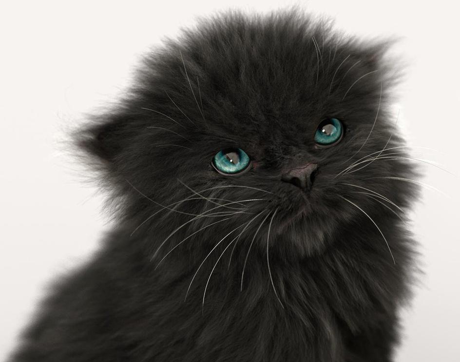 Black Kittenby Massimo Righi