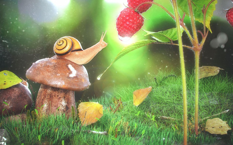 snail, raspberries, design, 3d, animation