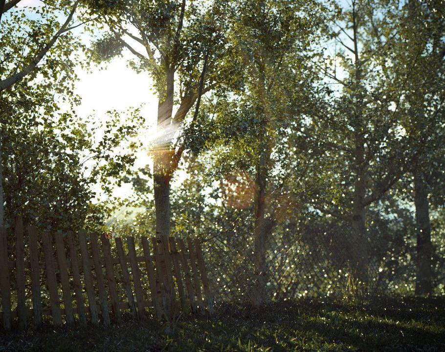 Butterfly - morningby Bibusz