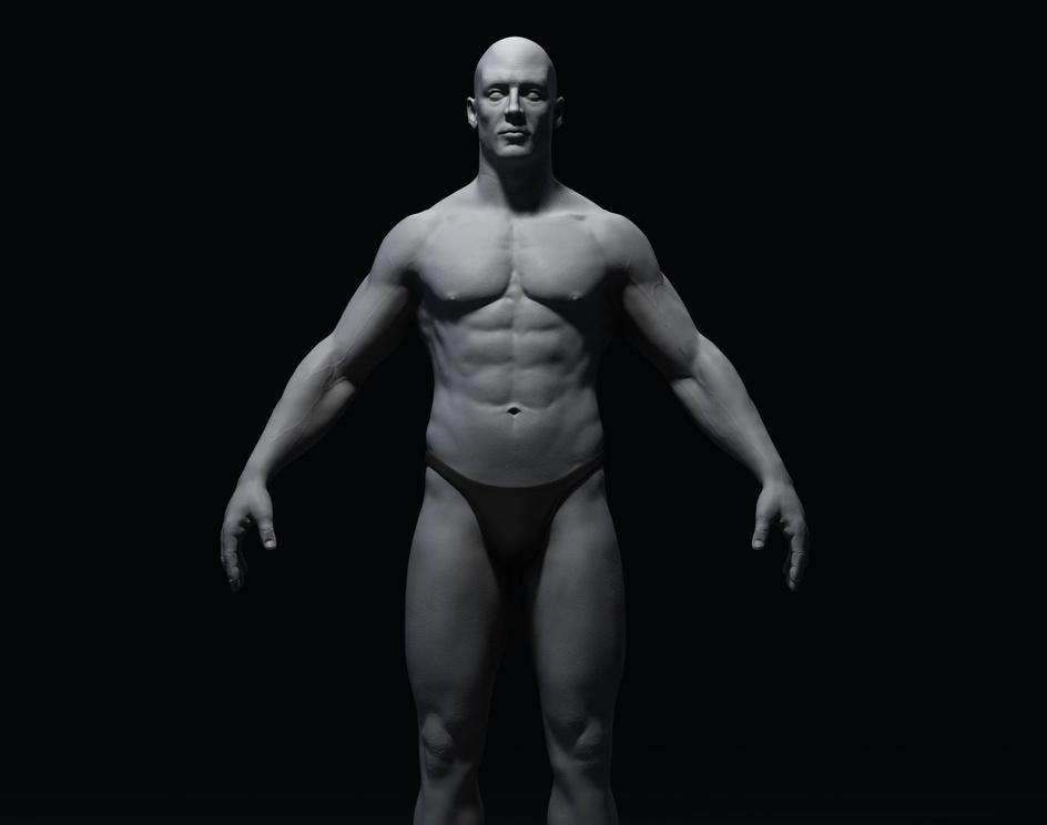 Anatomy Study Front Grayby Andi Edirisinghe