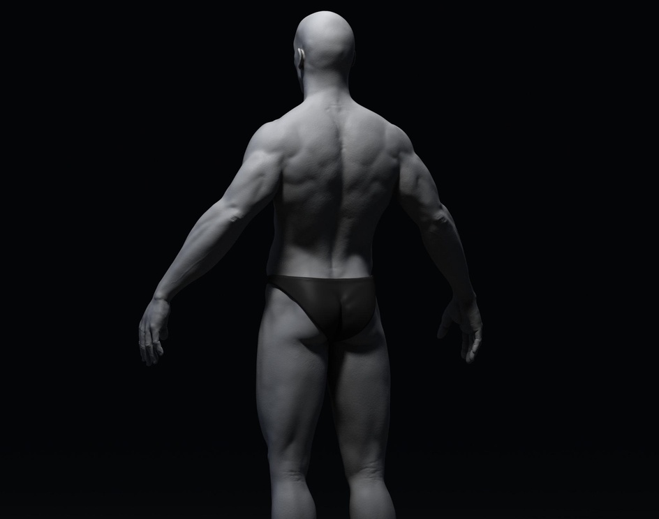 Anatomy  Study  Back Grayby Andi Edirisinghe