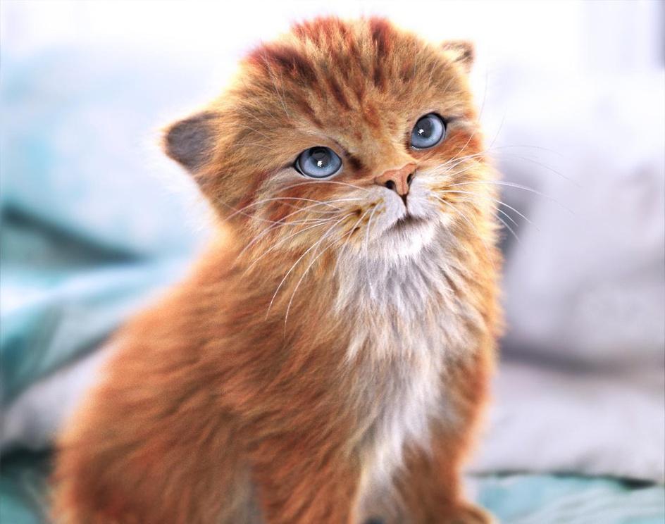 Orange Tabby Kittenby Massimo Righi