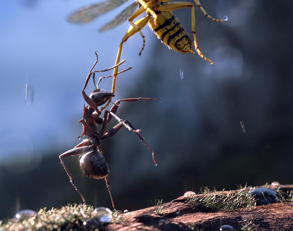 Bugs war, Ant Vs Waspby mauro baldissera