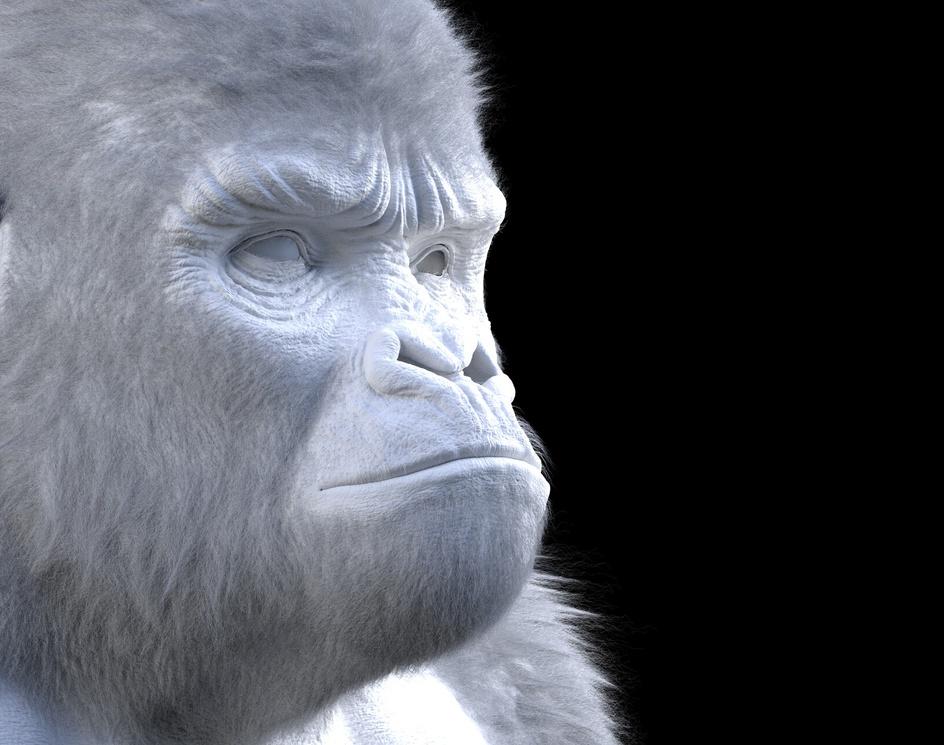 Gorillaby Alexandre Mougenot