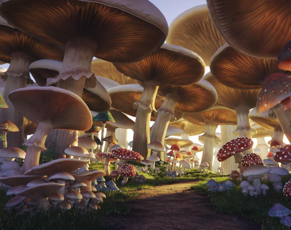 Mushroom Forestby AndreiSE