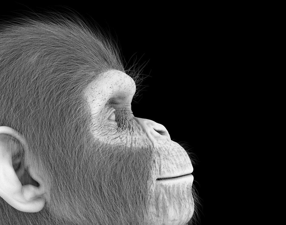Chimpanzeeby Ghaith Alsiyabi