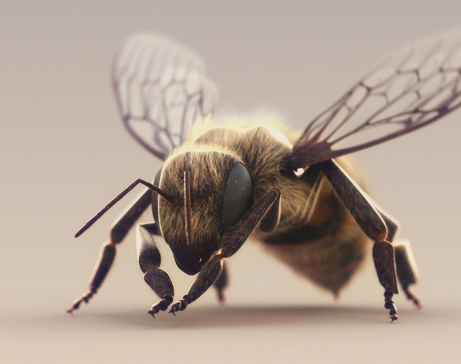 Honey Beeby AhmadReza AfsharMoghadam