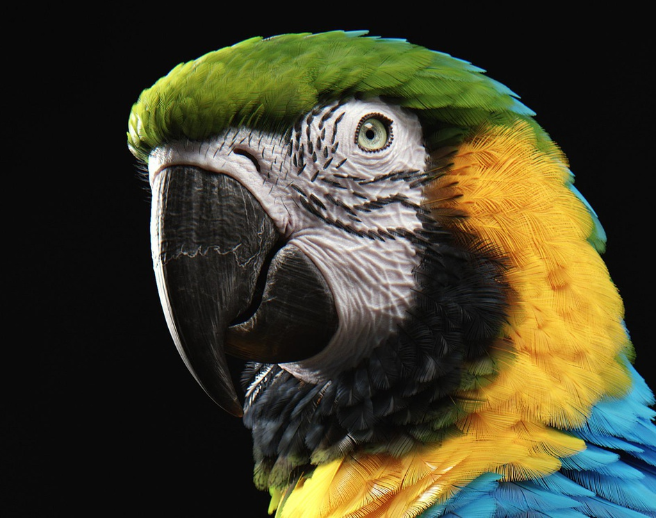 Blue-and-Yellow Macawby Yuriy Dulich