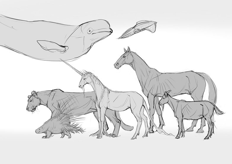 reference animal sketches