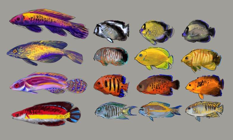colour study variation fish drawing illustration experimentation