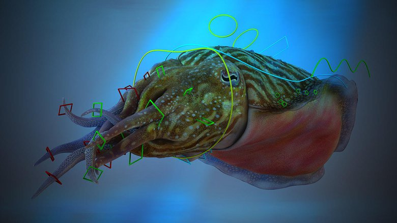 Rigging a cuttlefish, created for 3D Artist magazine