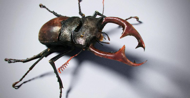 I really love the stag beetle in real life, so I created one in 3D.