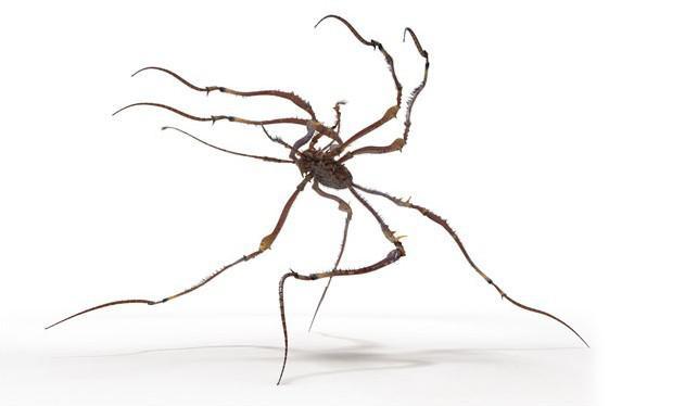 Fig. 07_spider_creature_model