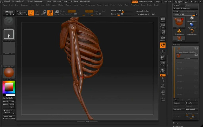 Ecorche: Anatomy of the Arm & Shoulder · 3dtotal · Learn
