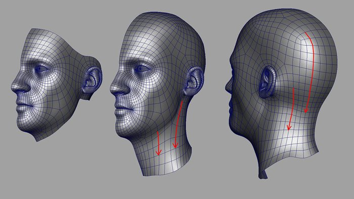Adding the neck and the back of the head