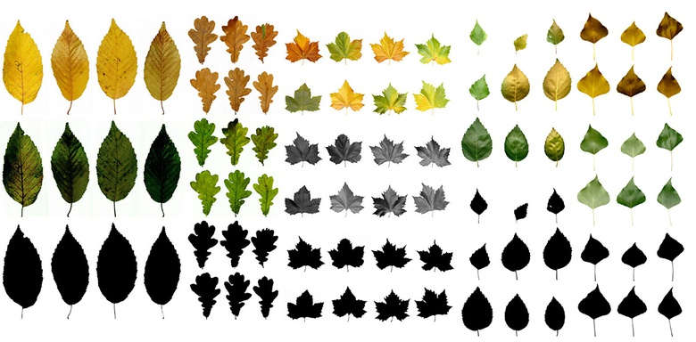 The variations of leaf texture used in the scene