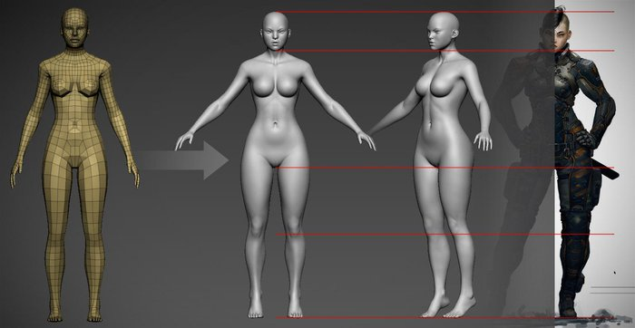 Getting the right bodily proportions