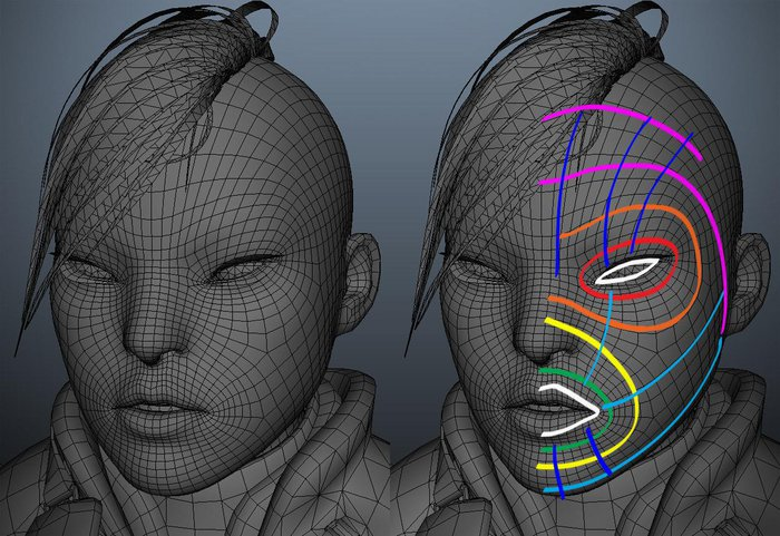 Working on the topology of the face