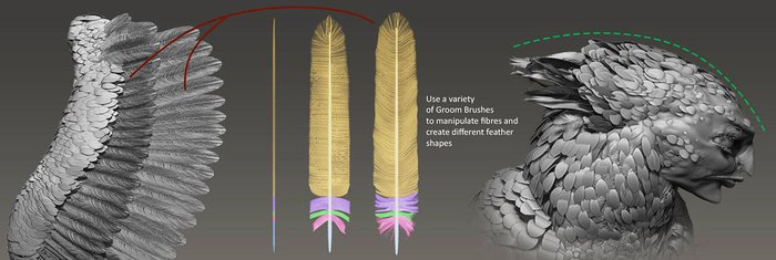 Progression of how the larger feathers are created
