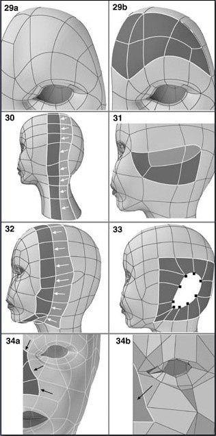 Fig. 6-8 Steps 29-34. 29). Dividing and shaping the forehead polygons. 30). Splitting the polygons in the center. 31). Dividing polygons by the ear. 32). Splitting polygons down from the top of the head to the chin 33). Merging polygons into one for the ear location and arranging the 9 points around it. 34). Beginning the nose by unifying polygons into one.