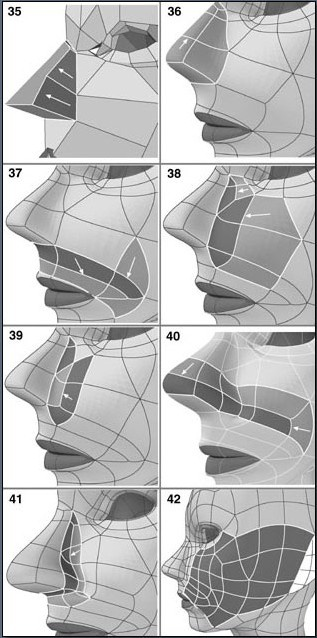Fig. 6-9 Steps 35-42. 35). Beveling out the nose polygon. 36). Dividing the nose polygon so each section has 4 sides. 37). Splitting polygons and moving points below the nose (darker areas). 38). Dividing polygons next to the nose 39). Refining the polygons next to the nose by splitting them some more. 40). Dividing some more polygons. 41) Making an extra line close to the nose wing. 42) Splitting polygons and moving points on the side of the face.