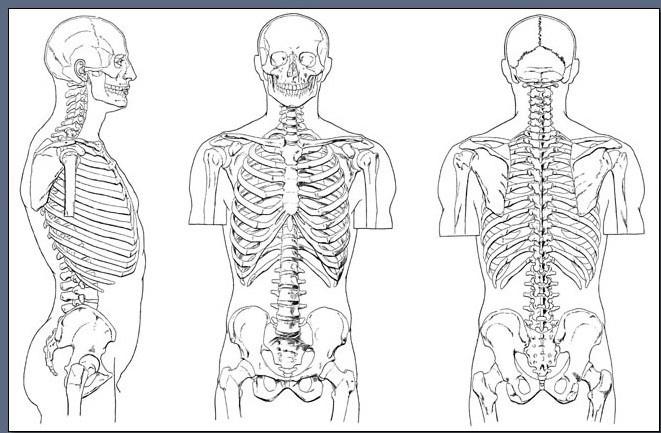 Fig. 6-13 The upper body skeleton.