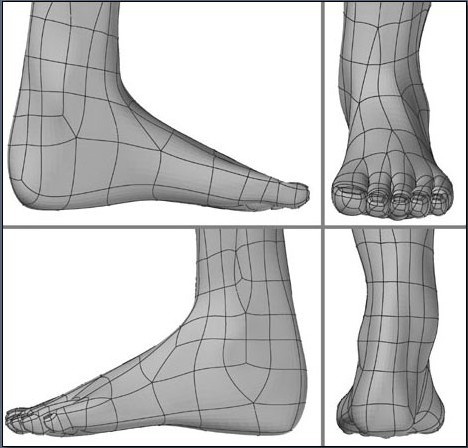 Fig. 6-31 Step 10. Finalizing the foot and toes in the various view windows.