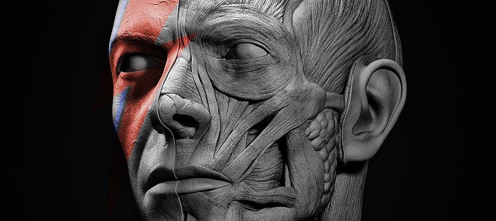 David Bowie facial anatomy tribute 3d art