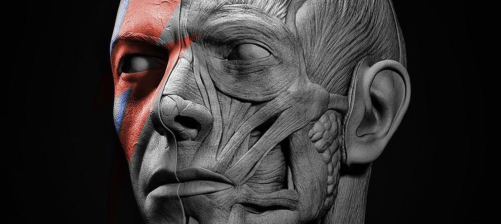 David Bowie facial anatomy tribute 3d art