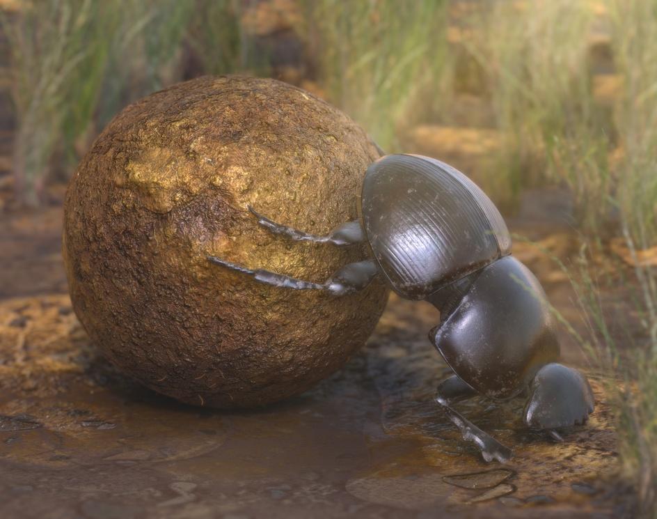 Dung Beetleby victz26