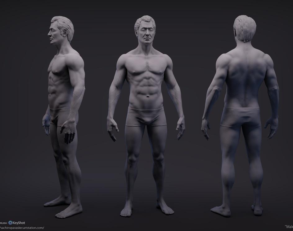male_anatomy_studyby sachin pavasker