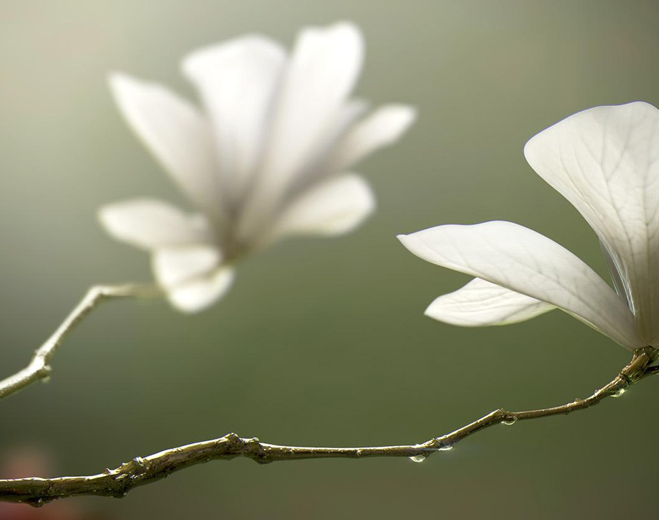 Flowers in full bloomby duchengbin