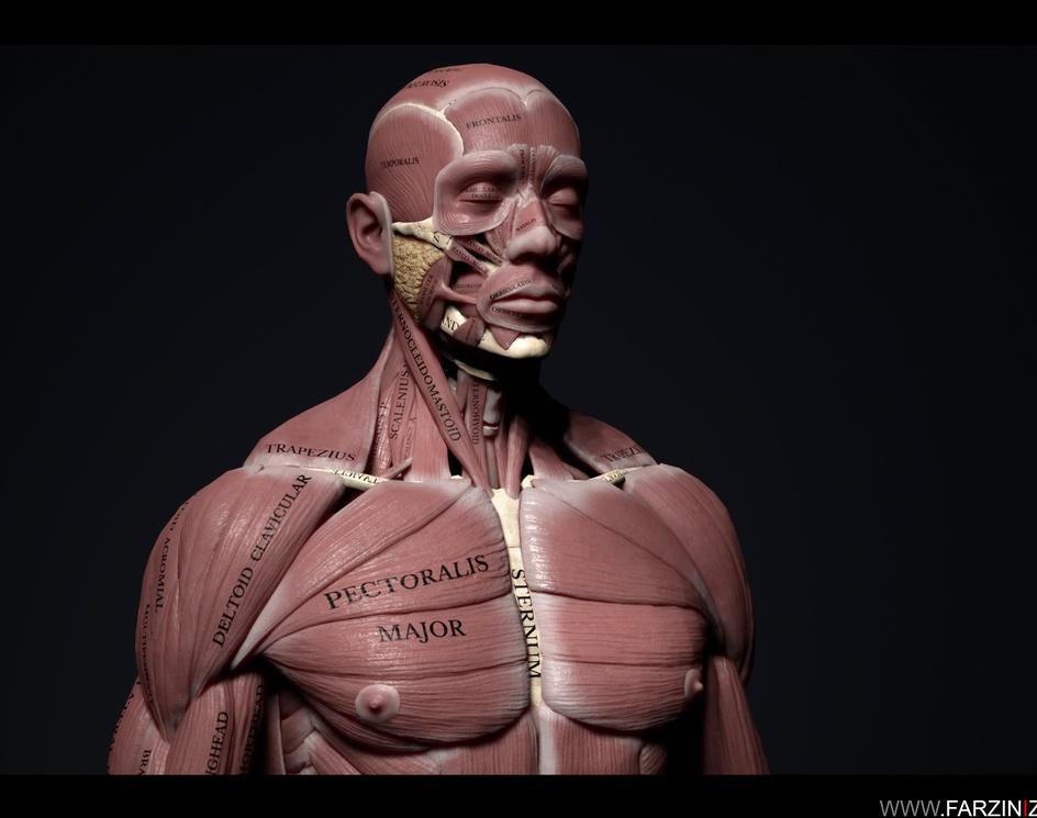 Human Anatomy Kitby Farzin Izadyar