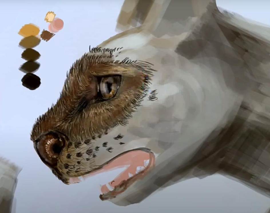 Drawing a Brazilian feline - Herpailurus yaguarondiby Maycon Chaves