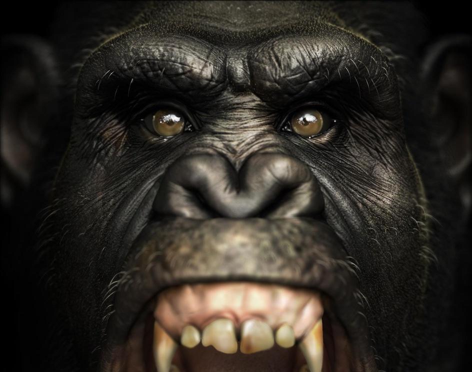 The Chimpanzeeby lakshminarayan