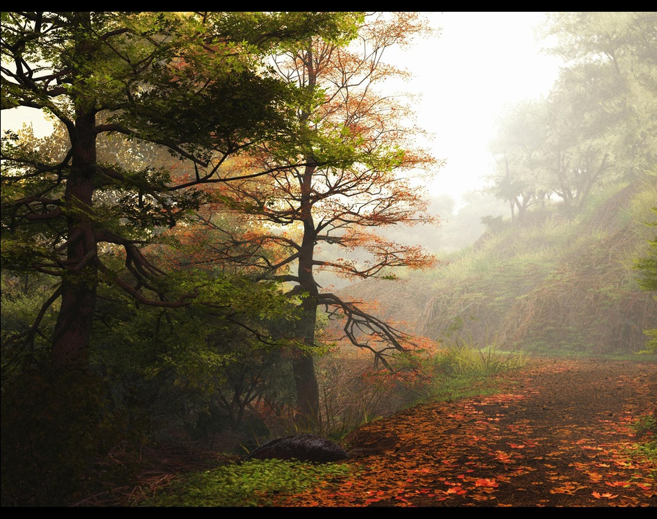 Forest Pathby rschlenker
