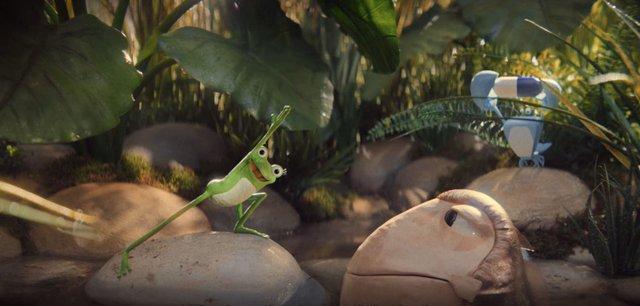frogs on rocks