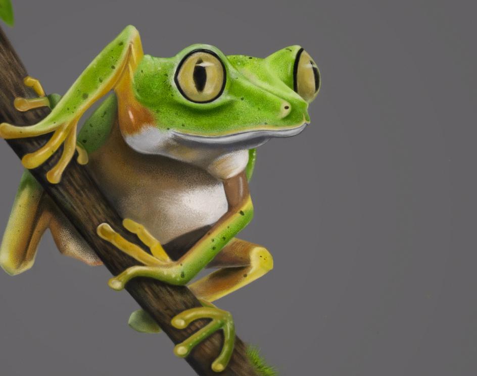 Frog in Wood Logby Francisco Jose Reis Paioes
