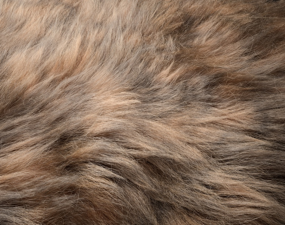 Fur (Ornatrix + Redshift)by Andrew Krivulya